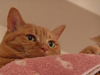 お誕生日猫 しぇる8歳編。_a0143140_2218431.jpg