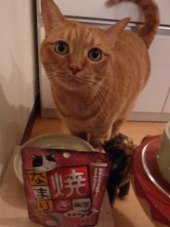 お誕生日猫 しぇる8歳編。_a0143140_22193451.jpg