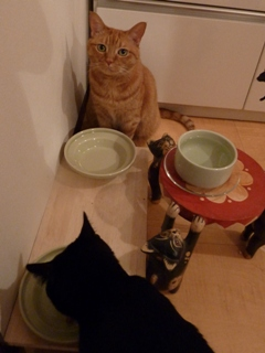 お誕生日猫 しぇる8歳編。_a0143140_22392197.jpg