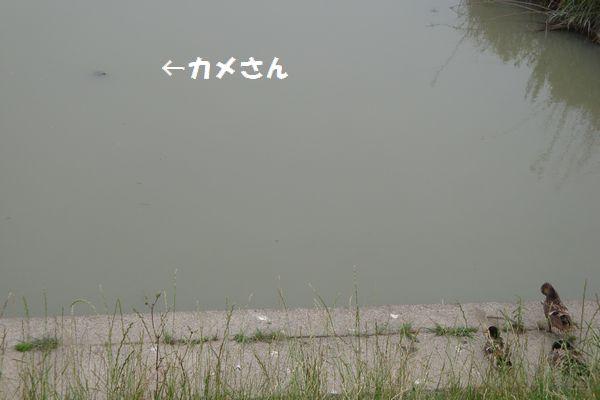 b0214647_19483087.jpg
