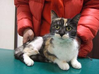 猫のガリちゃん_b0059154_9472351.jpg