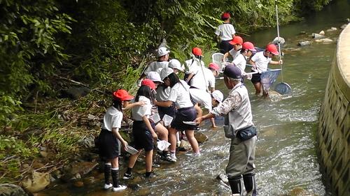 箱作小学校4年「田山川の生き物観察」サポート_c0108460_21242536.jpg