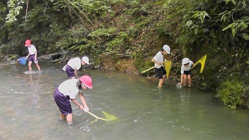 箱作小学校4年「田山川の生き物観察」サポート_c0108460_22331546.jpg