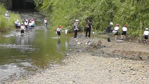 箱作小学校4年「田山川の生き物観察」サポート_c0108460_23402771.jpg