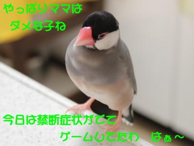 b0158061_21103930.jpg