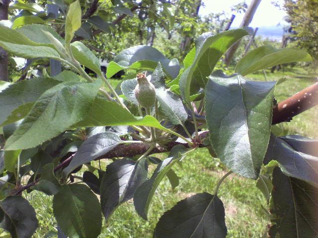 果樹園の写真_b0106766_222527100.jpg