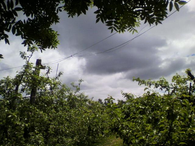 果樹園の写真_b0106766_22252724.jpg