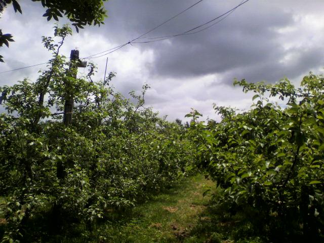 果樹園の写真_b0106766_22252745.jpg