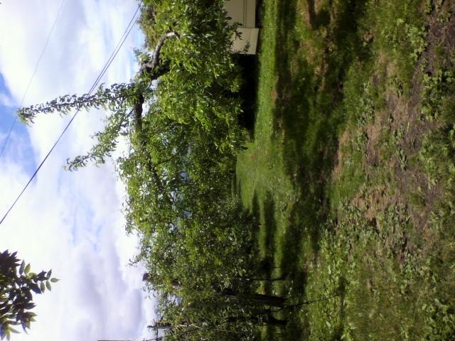 果樹園の写真_b0106766_22252748.jpg