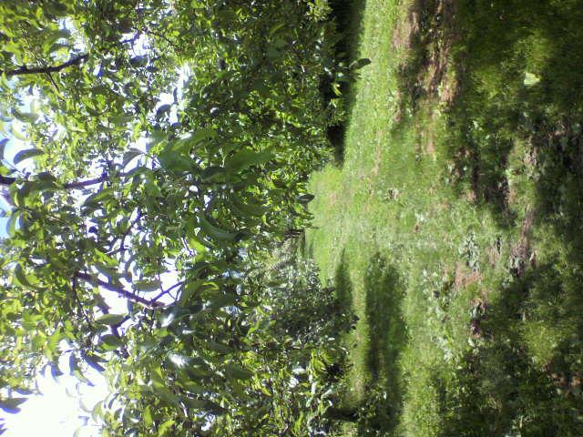 果樹園の写真_b0106766_22252773.jpg