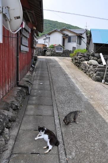 黄島の猫写真_e0171573_181942.jpg