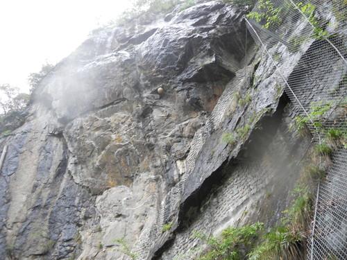 比叡山に蜂の巣?_b0152079_17533910.jpg
