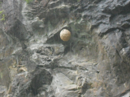 比叡山に蜂の巣?_b0152079_17541436.jpg