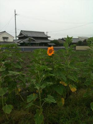 a0120113_047375.jpg
