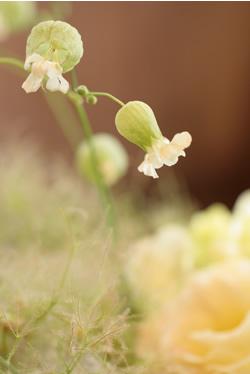 花の輪 _d0086634_171296.jpg