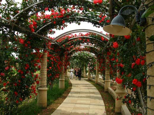 バラの回廊(ハイジの村)_d0127634_12295863.jpg
