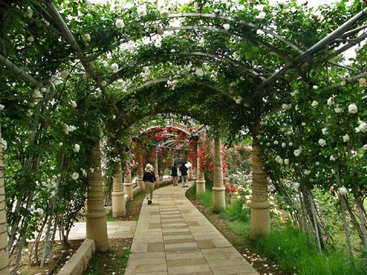 バラの回廊(ハイジの村)_d0127634_1230208.jpg