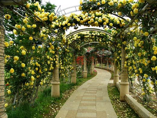 バラの回廊(ハイジの村)_d0127634_12312614.jpg
