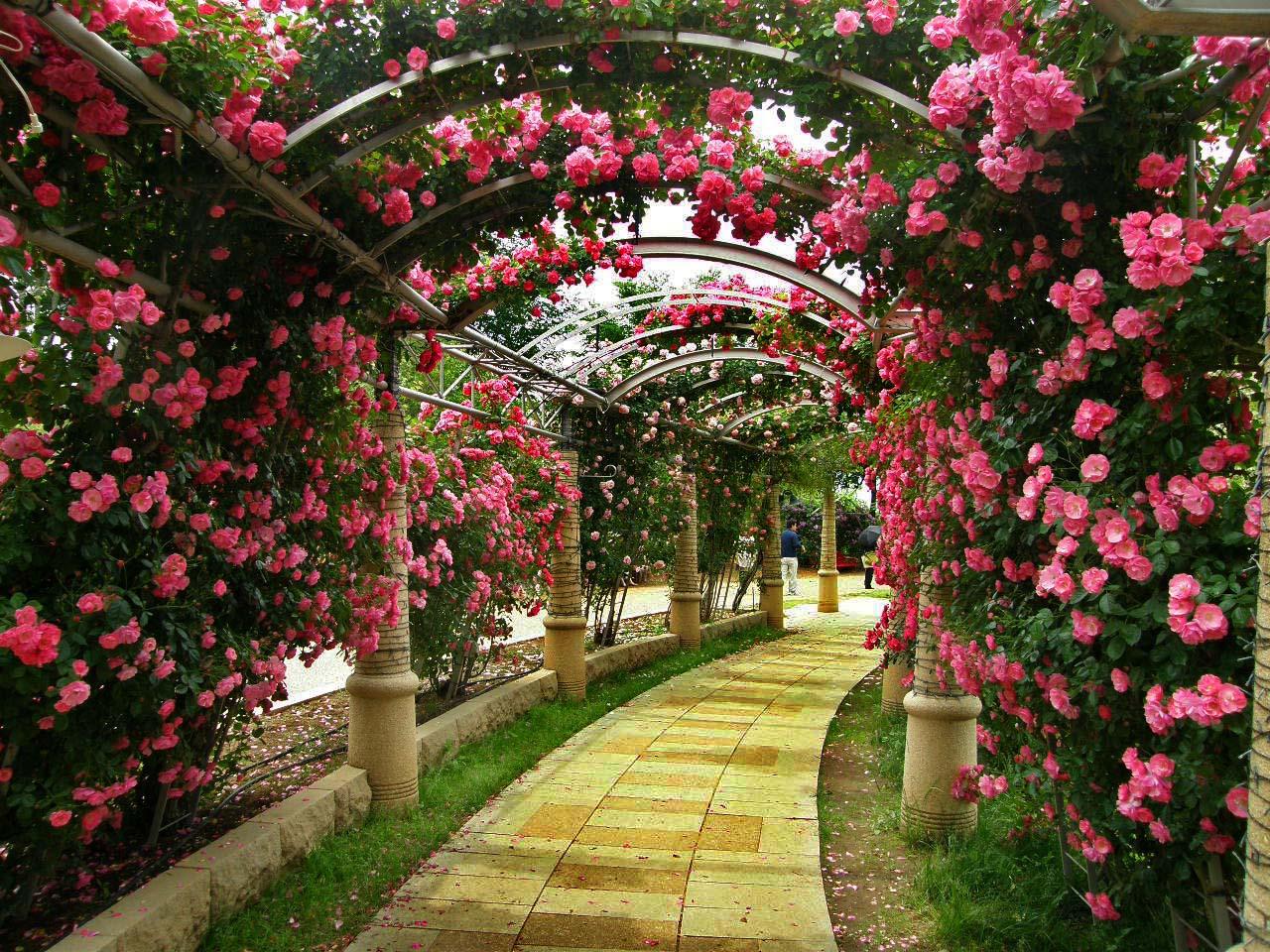 バラの回廊(ハイジの村)_d0127634_123186.jpg