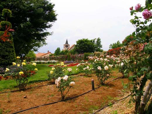 バラの回廊(ハイジの村)_d0127634_12372361.jpg