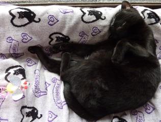 えんやこら寝猫 のぇる編。_a0143140_231494.jpg