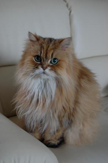 愛猫 ニータ_e0159050_8115822.jpg
