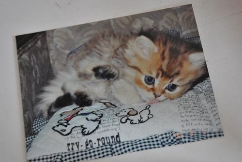 愛猫 ニータ_e0159050_852517.jpg