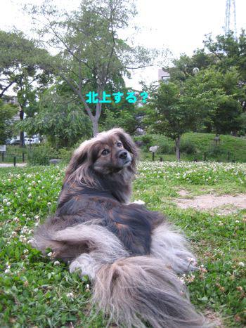 桜プロジェクト  〜お届けスタート〜 *追記あり_a0119263_21422240.jpg