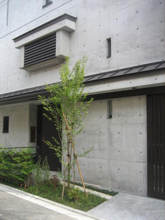 ささやかな植木でも町を歩く人は癒されます_d0021969_302550.jpg