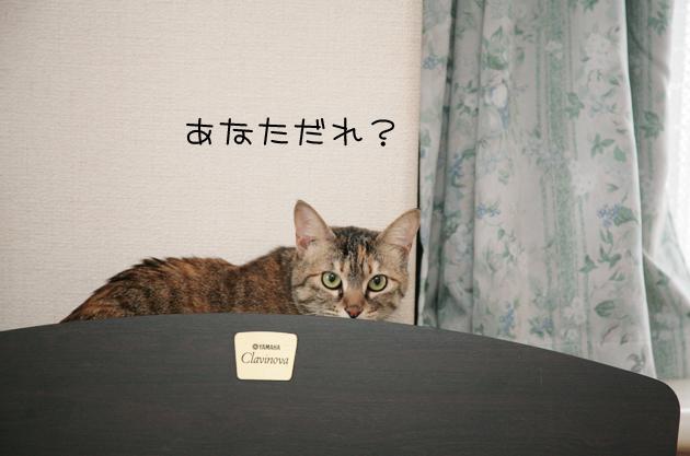 鞠姫♡&ミカちゃん近況_c0223478_23405171.jpg