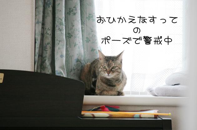鞠姫♡&ミカちゃん近況_c0223478_2349448.jpg