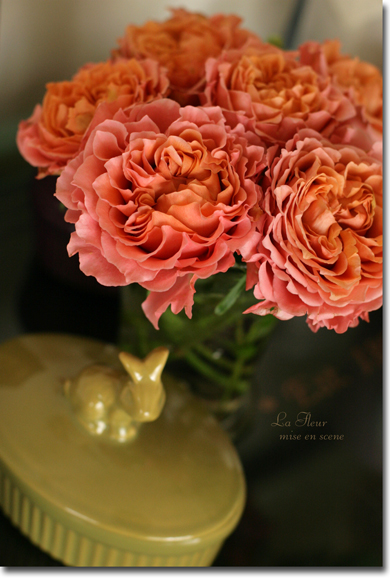 rose     アルマジロ  _f0127281_15351039.jpg