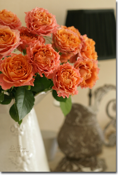 rose     アルマジロ  _f0127281_15351974.jpg
