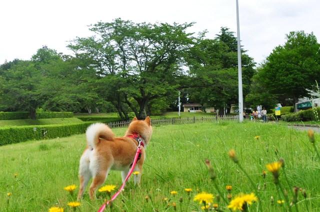 賑わいの菖蒲園_a0126590_2352615.jpg