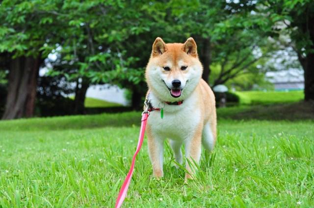 かぼちゃんと笑顔_a0126590_544221.jpg