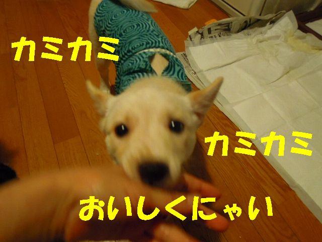 f0218911_18325380.jpg
