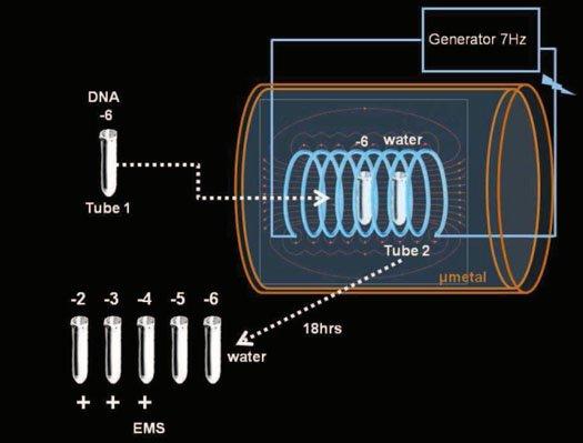 DNAにまつわる不思議な実験:DNAのテレポート、ミュータント、電磁書き込み_e0171614_10451520.jpg