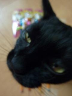 おもちゃ大好き猫 ろった編。_a0143140_2227282.jpg