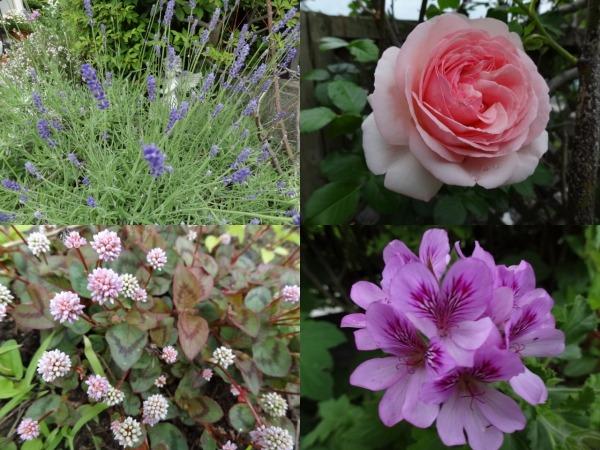 今日の庭_d0165645_2024693.jpg