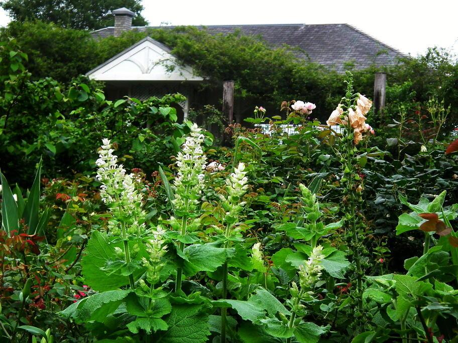 あの庭園に、あの小道の先に…またっ!?_e0064158_2337072.jpg