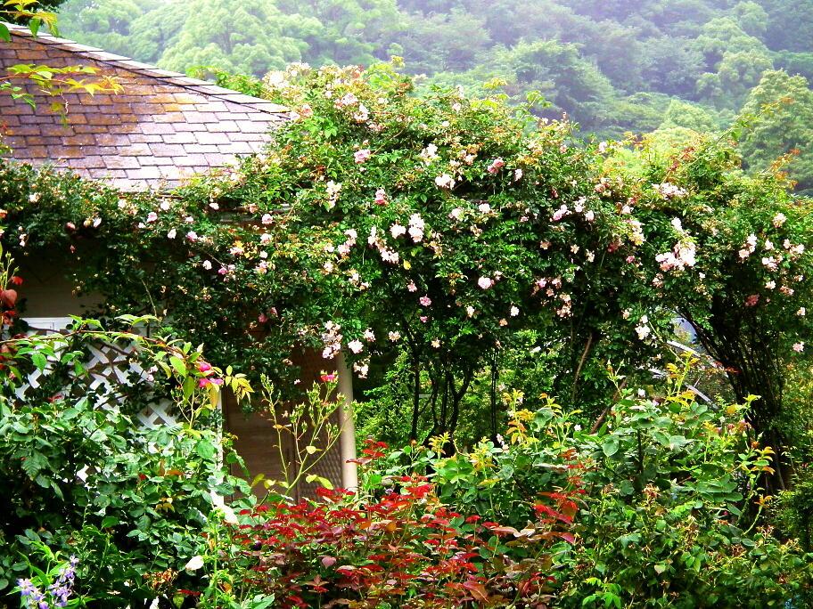 あの庭園に、あの小道の先に…またっ!?_e0064158_23373725.jpg