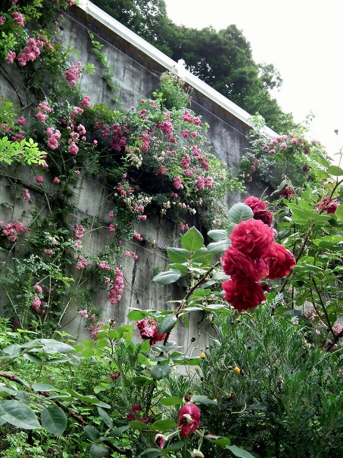 あの庭園に、あの小道の先に…またっ!?_e0064158_23384612.jpg