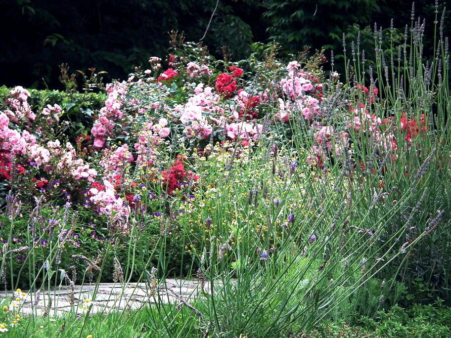 あの庭園に、あの小道の先に…またっ!?_e0064158_23395122.jpg