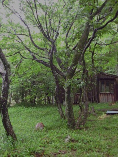 草刈り_c0169176_1723967.jpg