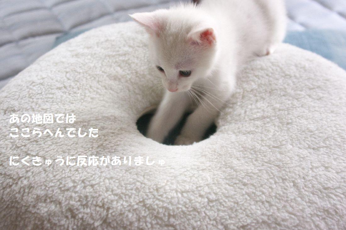 f0197682_1232481.jpg