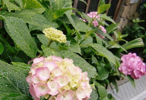 雨の神楽坂_d0218895_21341825.jpg
