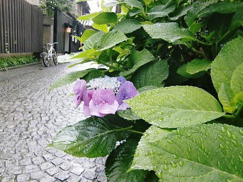雨の神楽坂_d0218895_21373181.jpg