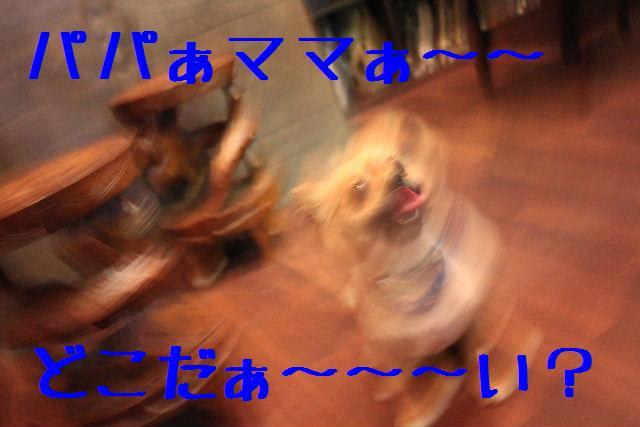 b0130018_18114559.jpg