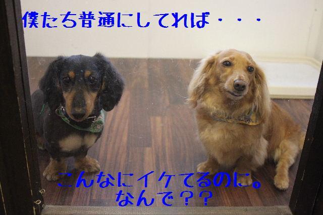 b0130018_18144037.jpg