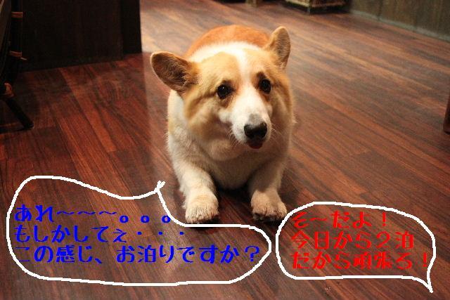 b0130018_1824887.jpg
